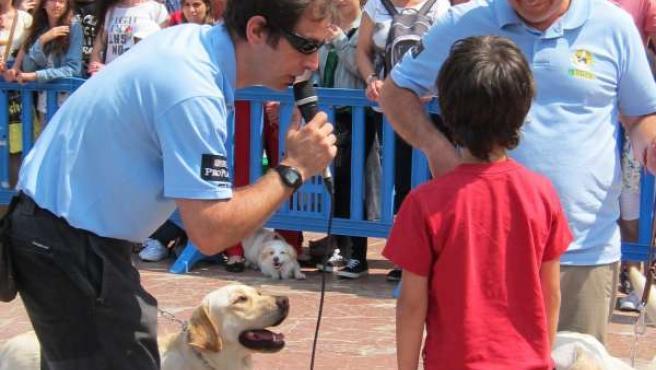 Los Monitores De La Fundación Con Un Voluntario Y Los Perros En La Exhibición