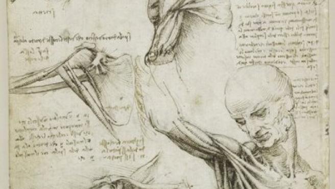 Estudio de los músculos del hombro elaborado por Leonardo entre 1510 y 1511