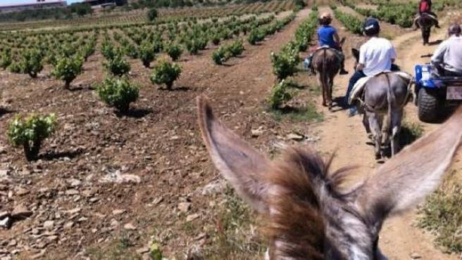 Un grupo de enoturistas en la Ribera del Guadiana.