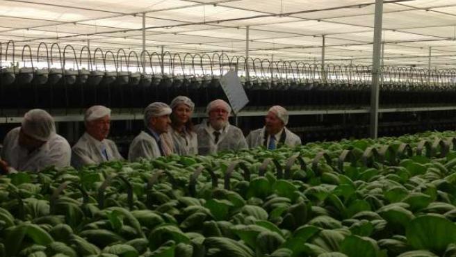 Cañete, en el interior de uno de los invernaderos de cultivos móviles