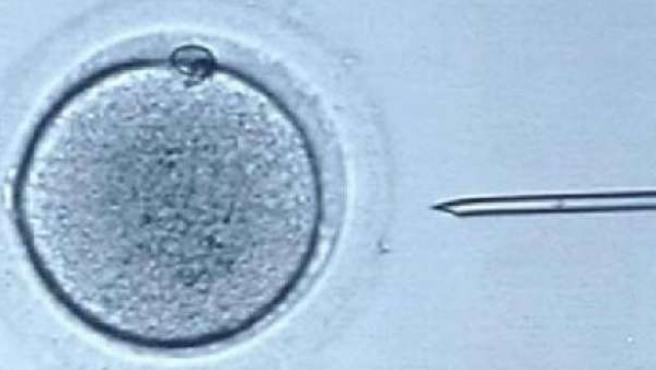 Imagen de archivo del proceso de fecundación in vitro.