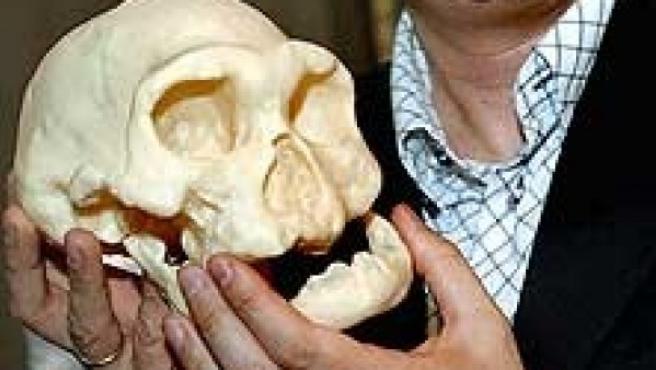 Un cráneo de 1,8 millones de años cuestiona la historia de evolución humana.