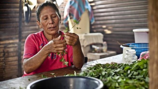 María Tránsito, agricultora guatemalteca especializada en el cultivo de maíz.