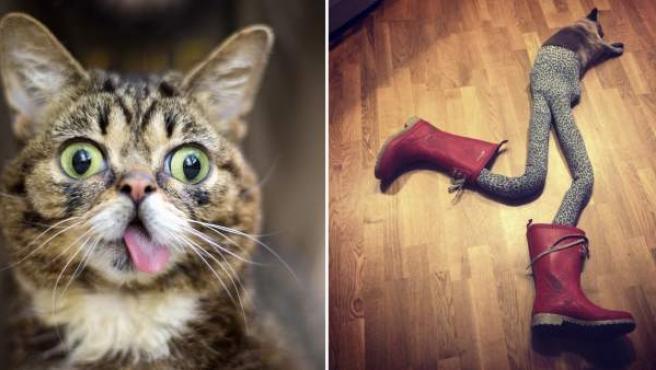 Imagen de la gata Lil Bub (izquierda) y de Gucci con los leotardos de sus dueños (derecha).
