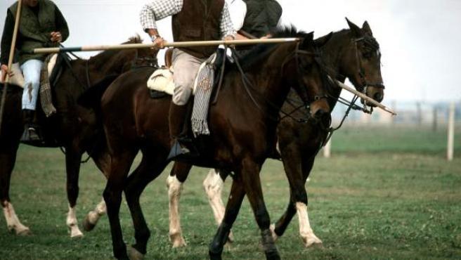 Los toreros Francisco Rivera y José Antonio Canales Rivera a caballo durante la práctica del acoso y derribo con garrocha.