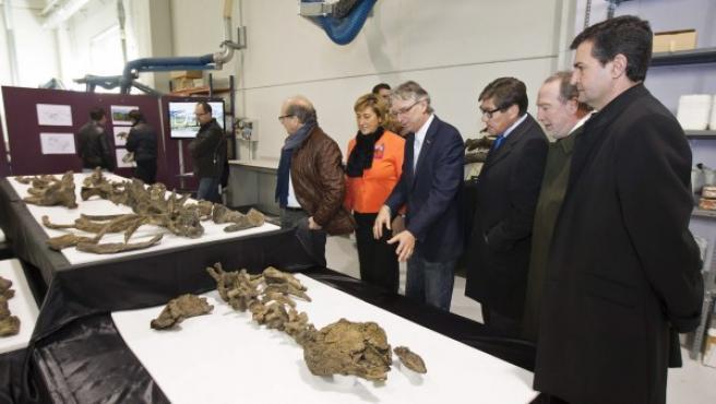 Varios de los fósiles de la nueva especie de dinosaurio presentado que fue hallado en una mina de cielo abierto de Santa María de Ariño (Teruel).