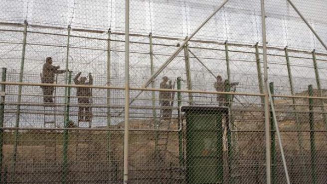 Varios operarios colocan concertinas a lo largo del perímetro fronterizo de Melilla.