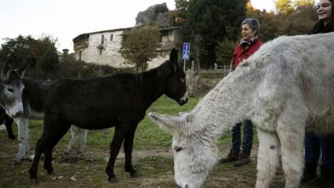Asociación Andrea que realiza asinoterapia y elabora jabones con leche de burra