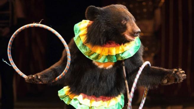 Un oso, en un espectáculo circense.