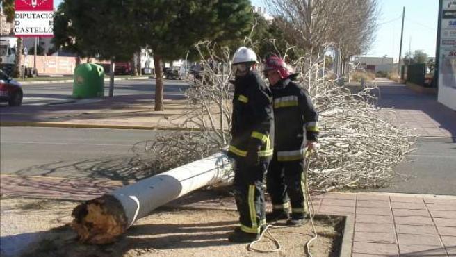 Bomberos junto a un árbol arrancado por el viento