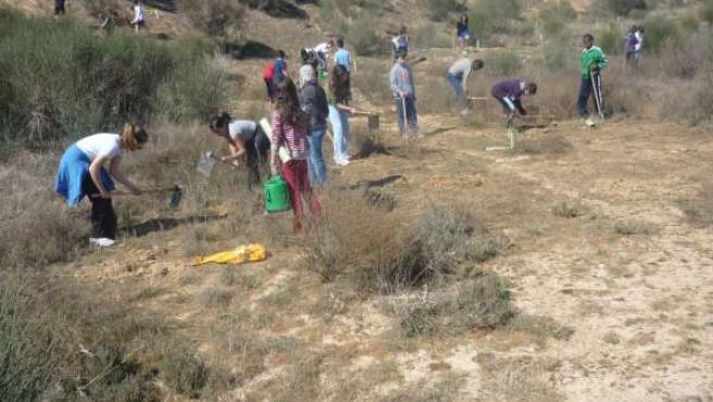 Una de las actividades de reforestación