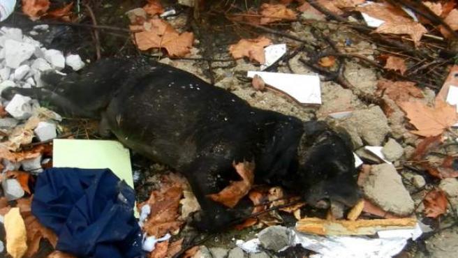 El cadáver de un perro hallado en Moratalaz a principios de enero con señales de haber participado en una pelea