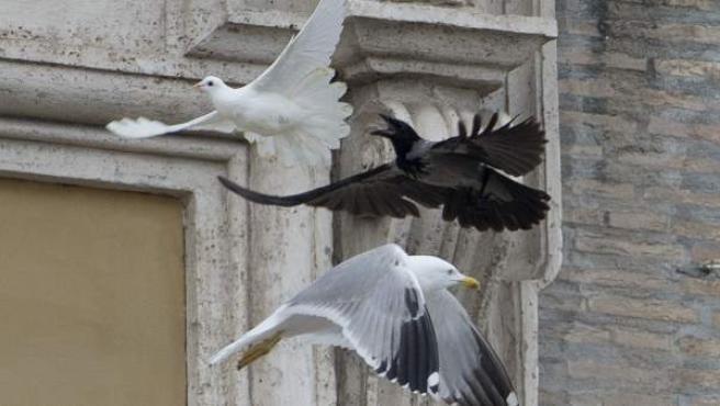 Un cuervo y una gaviota atacan a una paloma por la paz lanzada por niños junto al papa Francisco este domingo.