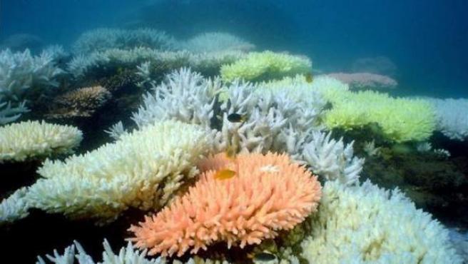La Gran Barrera de Coral es Patrimonio de la Humanidad