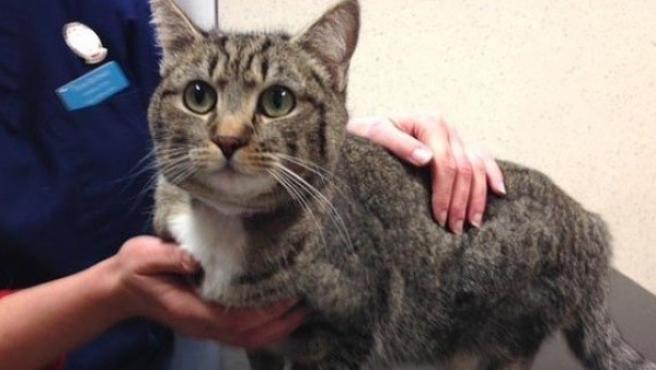 'Juanita', una gata de Fuerteventura, aparece en un garaje de Escocia.
