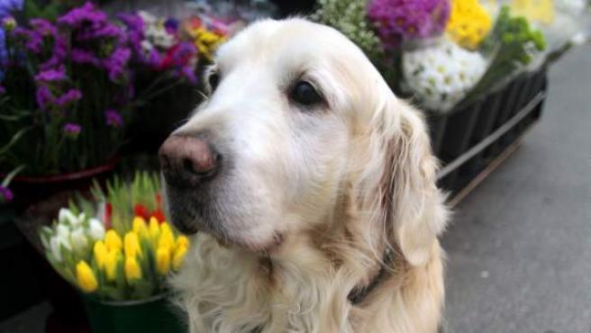 Ney es un curioso perro que anima la coruñesa plaza de Lugo desde hace casi trece años.