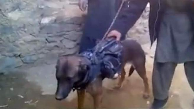 Un perro supuestamente de las tropas de EE UU capturado por los talibán en Afganistán.