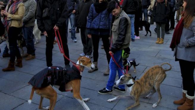 Concentración contra el maltrato a los galgos en Callao, Madrid.