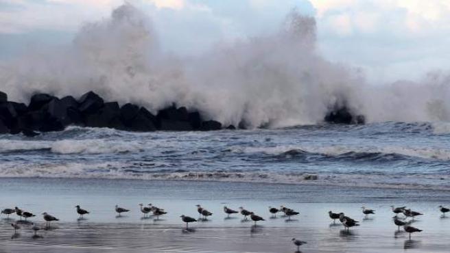 Varias gaviotas en la playa de La Zurriola San Sebastián, donde se ha decretado la alerta amarilla por fenómenos costeros.