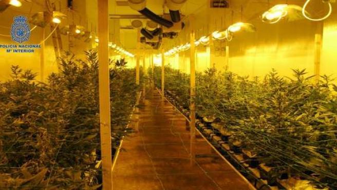 Invernadero de marihuana desmantelado por la Policía en Valencia