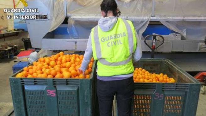 Operación contra el robo de naranjas