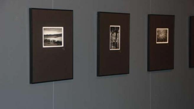 Recopilación de fotografías de Enric Filella.