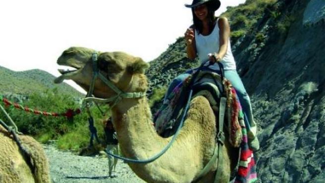 Camellos en el desierto de Tabernas