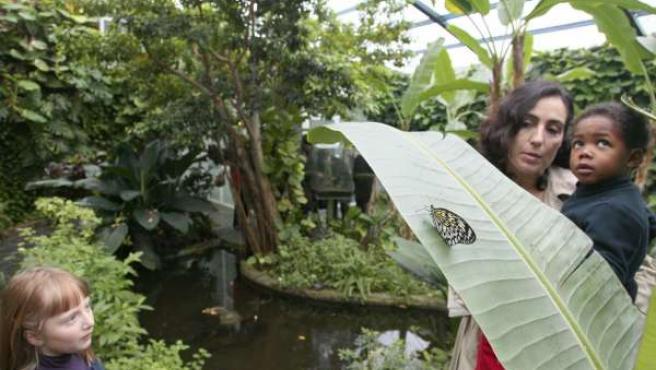 Mariposario tropical en el Parque de las Ciencias de Granada