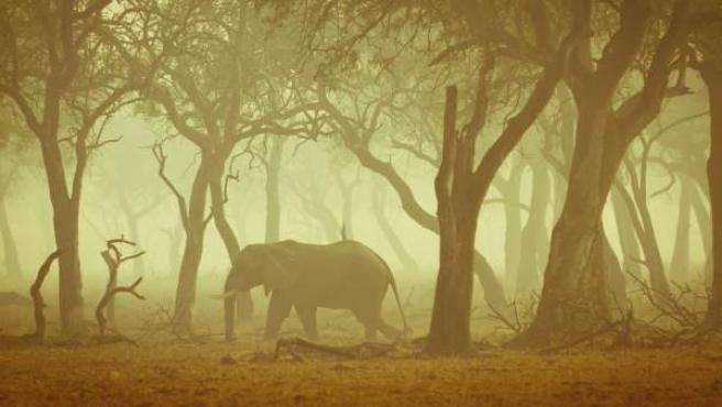 Elefante en un safari.
