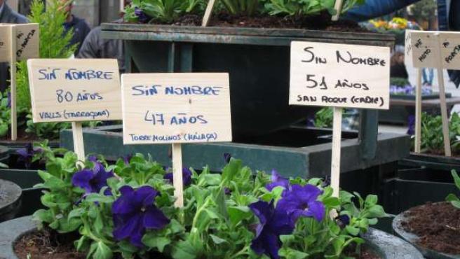 CHA ha plantado flores violetas en recuerdo a las mujeres asesinadas este año