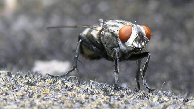 Una mosca posada en una superficie rugosa.