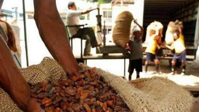 Muchos de los 'esclavos' del siglo XXI viven de la cosecha del cacao.