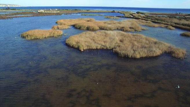 Laguna en Santa Pola