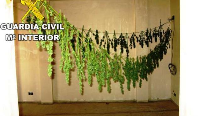 Marihuana en Onda