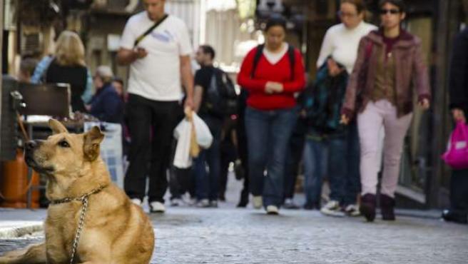 Turistas, Perro, Paseo