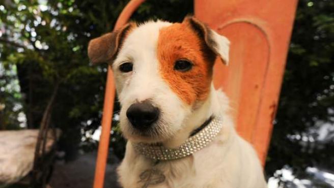 El perro Pancho, estrella de cine.