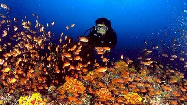 Una imagen del fondo marino.