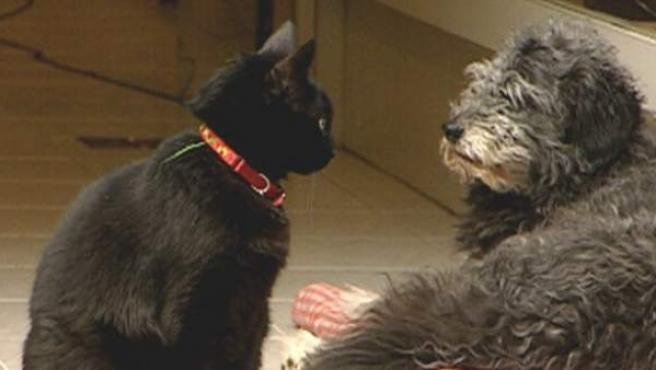 Gatos y perros son las mascotas preferidas.