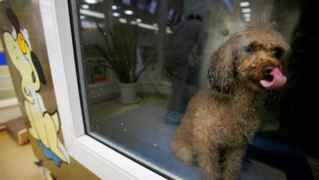 Imagen de un perro a la venta en un escaparate.