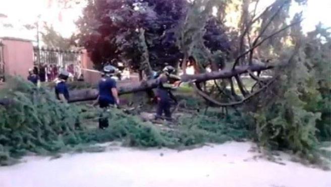 Uno de los árboles caído en El Retiro, y que acabó hiriendo a una niña.