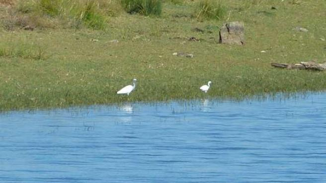Aves acuáticas, pantano, humedal