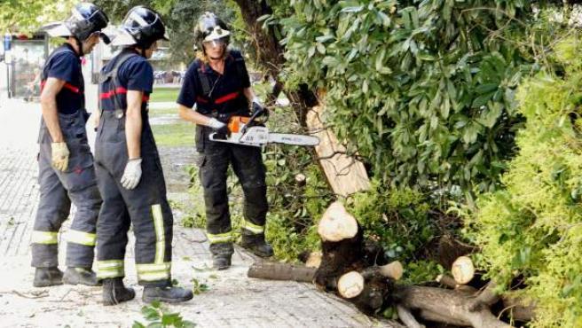 Unos bomberos cortan un árbol caído sobre la calle.