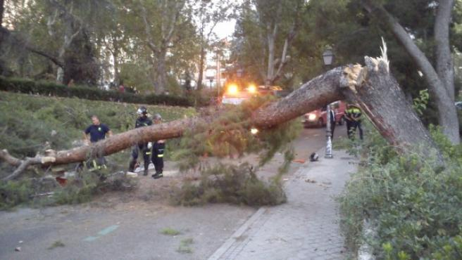 Los bomberos trabajan en la retirada de un árbol que cayó junto al Templo de Debod el 30 de agosto.