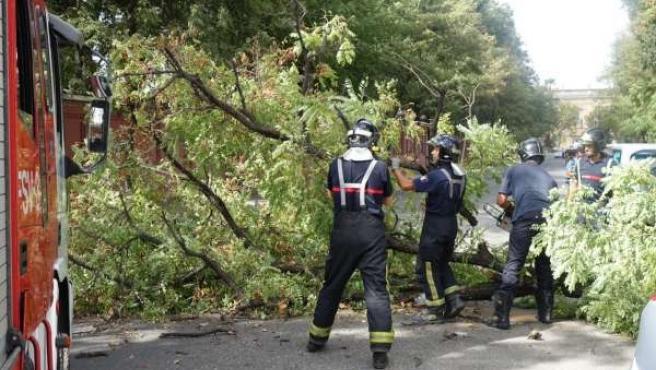 Caída de un árbol en la calle Palos de Sevilla