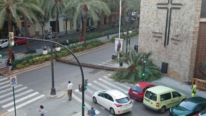 Palmera caída en Valencia