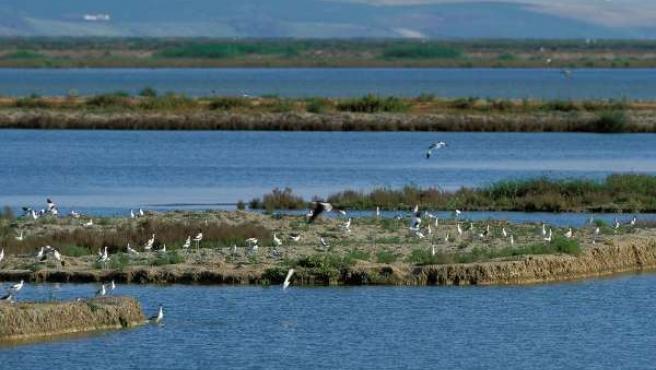 Una de las zonas estudiadas en el proyecto Aquabird 2000