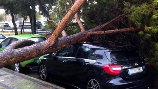 Árbol caído sobre un vehículo cerca del centro comercial Plenilunio de Madrid.