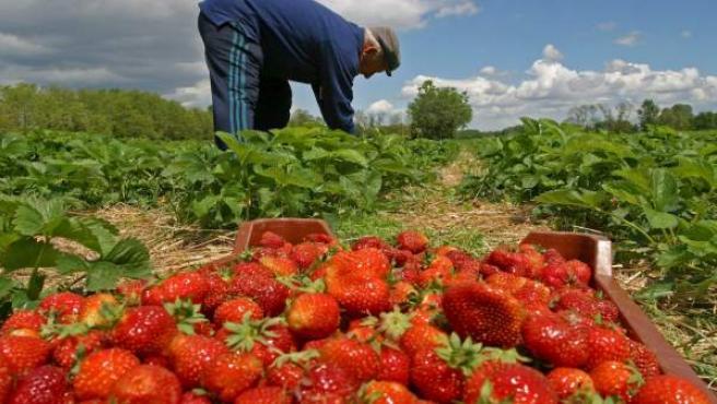 Un agricultor trabajando en el campo.