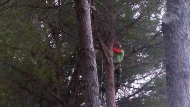 Un vecino de Alhaurín de la Torre (Málaga) denuncia que los Bomberos querían cobrarle unos 600 euros por bajar a su gata de un árbol.