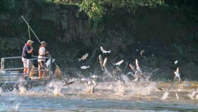 Pesca de carpas plateadas voladoras